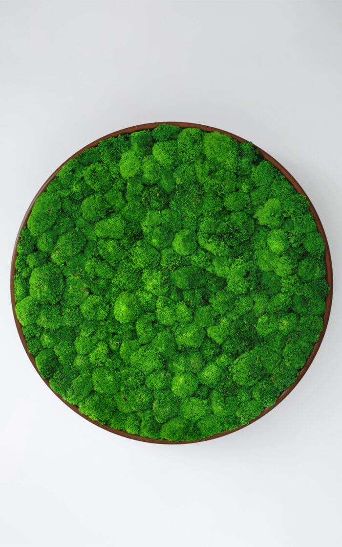 Een afbeelding van een akoestisch mospaneel op Akoestiekspecialist genaamd Greenmood G-Circles.