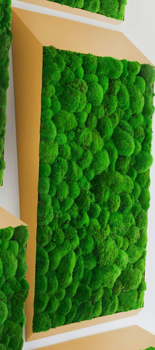 Een afbeelding van een akoestisch mospaneel op Akoestiekspecialist genaamd Greenmood Perspective Lines.